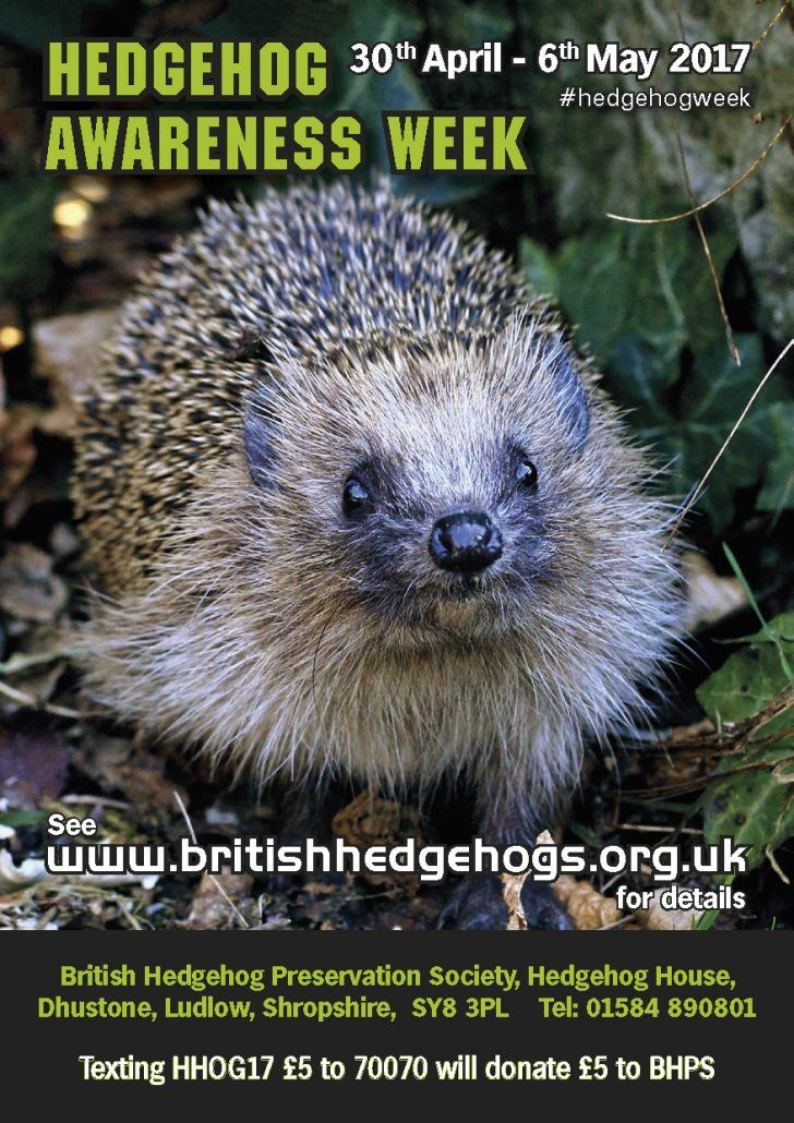 It's Hedgehog Awareness Week!